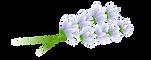 Mauldin Chiropractor. Set Apart Health Lavender Logo