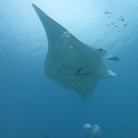 Maupiti : le top 5 des activités à faire sur la petite Bora Bora