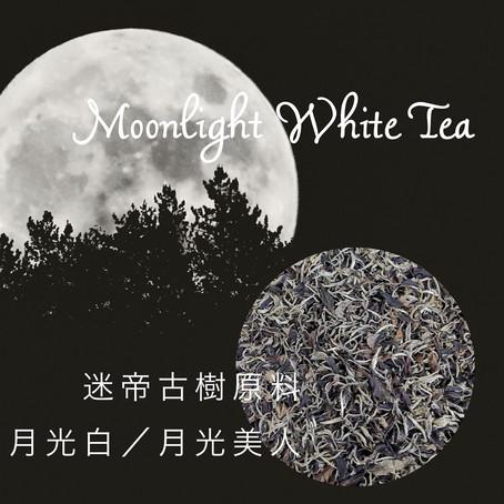 【本日入荷】2020年新茶「迷帝古樹月光白(月光美人)」