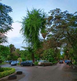 El-Maadi Street