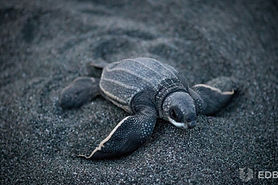 Help field assistants to continue protecting the sea turtles.