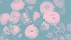 Colorful%20Flowers_edited.jpg