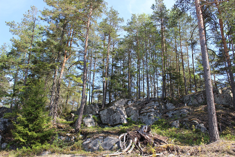 The trees and rocks on the grounds of Halden.