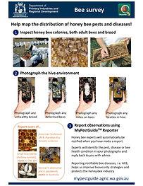 MyPestGuide Honey Bee Survey SOP_pdf (October 2021)corrected copy.jpg