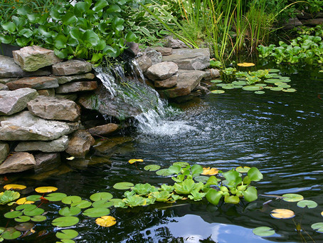 Why Backyard Ponds Are Important