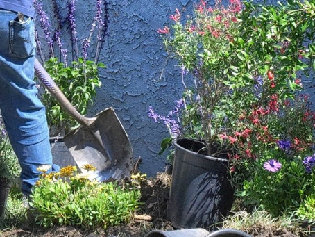 How to Plant Trees In Your Backyard