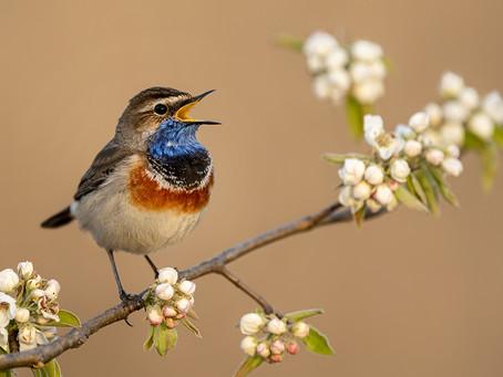 Plants That Attract Birds
