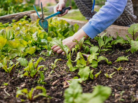 3 Reasons Why You Should Consider Building A Raised Garden Bed