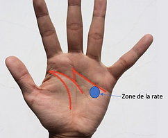 Zone de la Rate réflexologie palmair