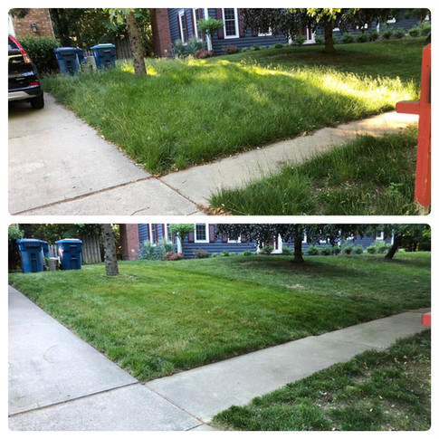 Over Grown Lawn