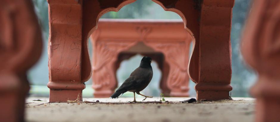 Crow Wisdom
