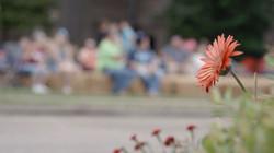 Flower Focus.jpg