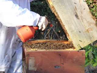 January In The Apiary - Varroa Treatment