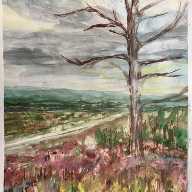 Tree at Frensham