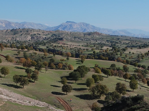 Developing fields in Kurdistan: Lessons learned in a professional and personal journey