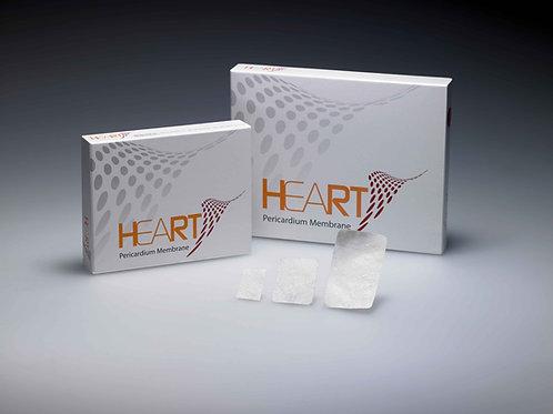HEART PERICARDIUM MEMBRANE