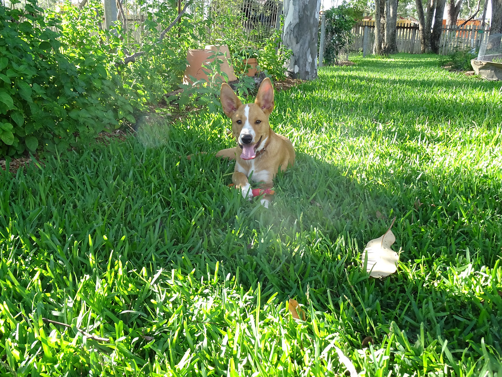 My puppy Hector.