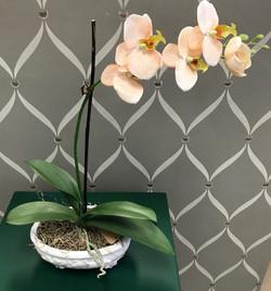 Orchids in Greensboro