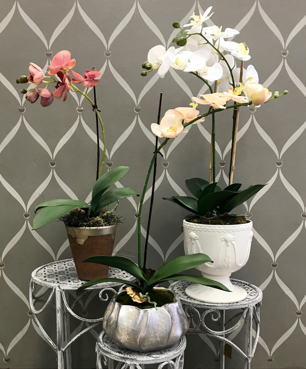 Orchid Overload!