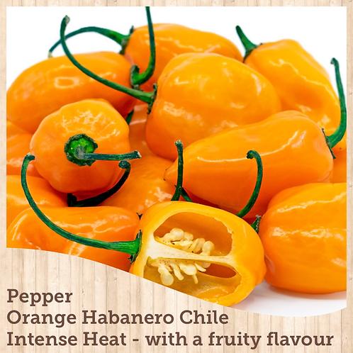 "Pepper Habanero Orange 3.5"" pot"