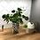 "Thumbnail: 4"" Ceramic Polka Dot Planter"