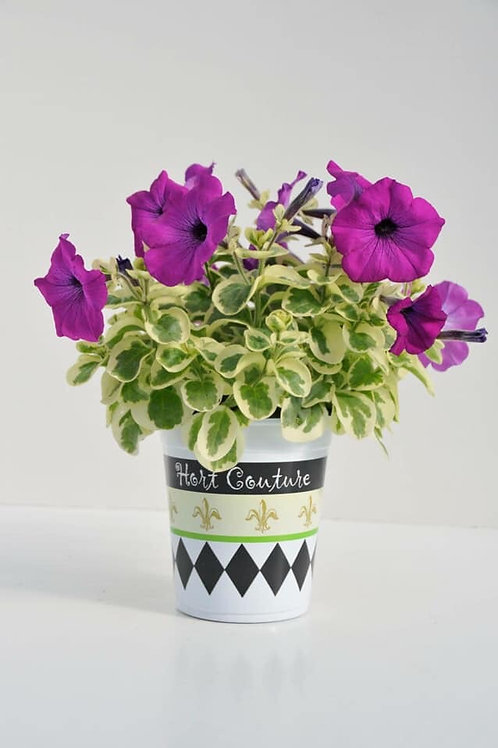 "Petunia Glamoflage Grape 3.5"" pot"