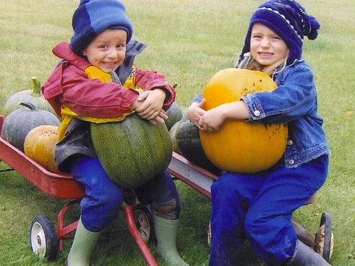 """Pumpkin Howden- 2.5"""" Pot"""