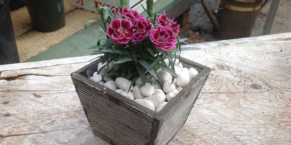 Drop in Mommy & Me Carnation pot!