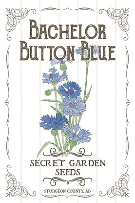 Bachelor Button Blue