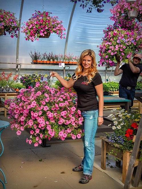 """Petunia Supertunia Vista Bubblegum - 3.5"""" pot"""