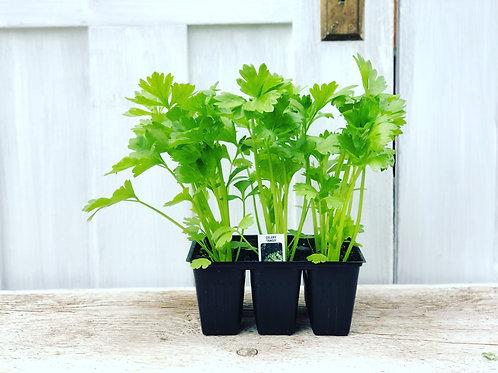 Celery Tango 6 pack