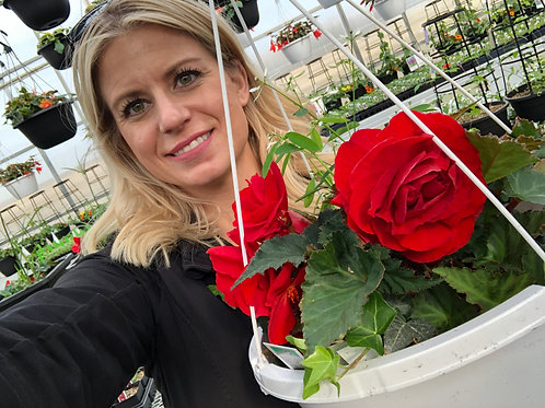 "Begonia NonStop Red 3.5"" pot"