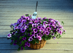 love me lavender