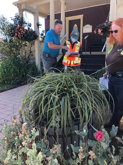 Grass Carex EverColor Everest 1 gallon pot