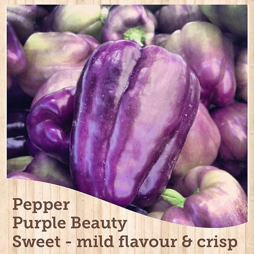 """Pepper Purple Beauty 3.5"""" pot"""