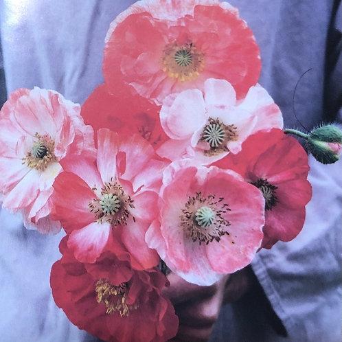 """Poppy Falling in Love 3.5"""" pot"""