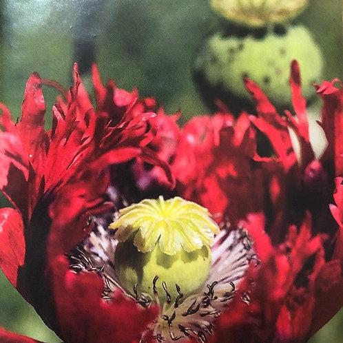 "Poppy Florist Pepperbox 3.5"" pot"