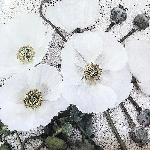 """Poppy Sissinghurst White 3.5"""" pot"""