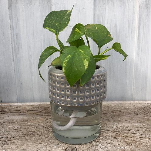 "6"" Self Watering Planter Grey"