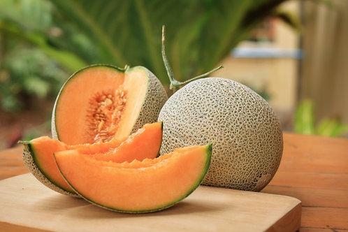 "Cantaloupe- 2.5"" Pot"