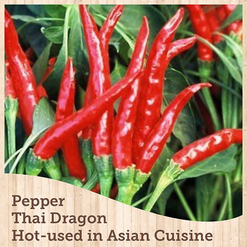 "Pepper Thai Dragon 3.5"" pot"