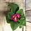 "Thumbnail: Houseplant Assorted 4"" Primula"