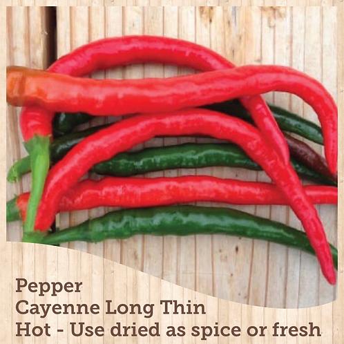 """Pepper Cayenne Long Thin 3.5"""" pot"""
