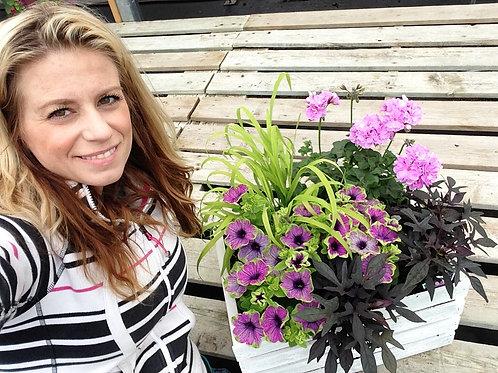 "Petunia Supertunia Picasso in Purple - 3.5"" pot"
