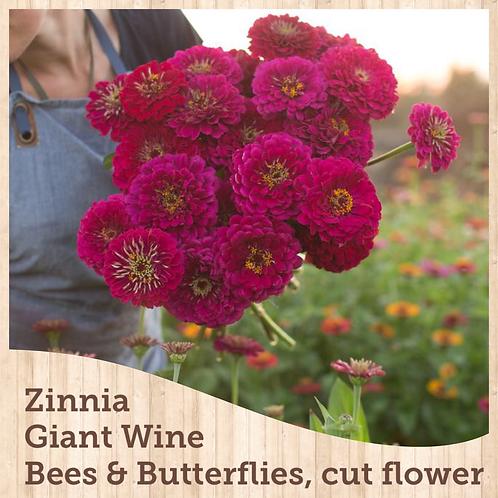 Zinnias Benary Giant Wine 6 pack