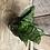Thumbnail: Houseplant Bird's Nest Snake Plant