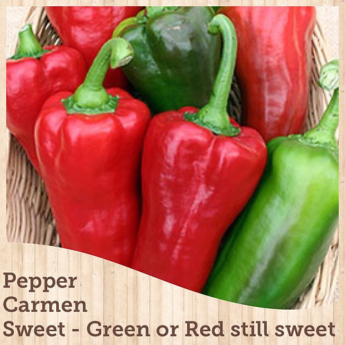 "Pepper Carmen 3.5"" pot"