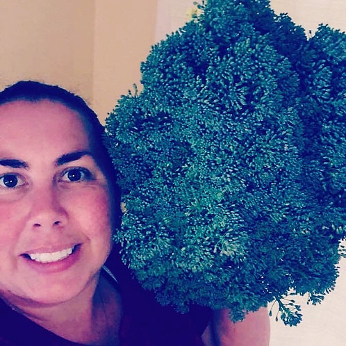 Broccoli 6 pack