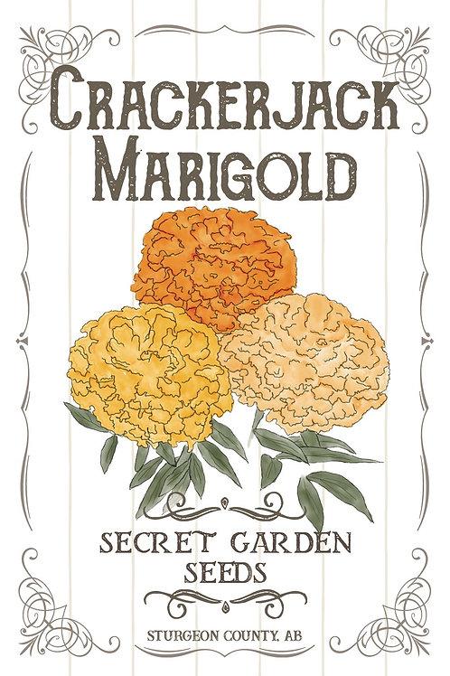 Crackerjack Marigold