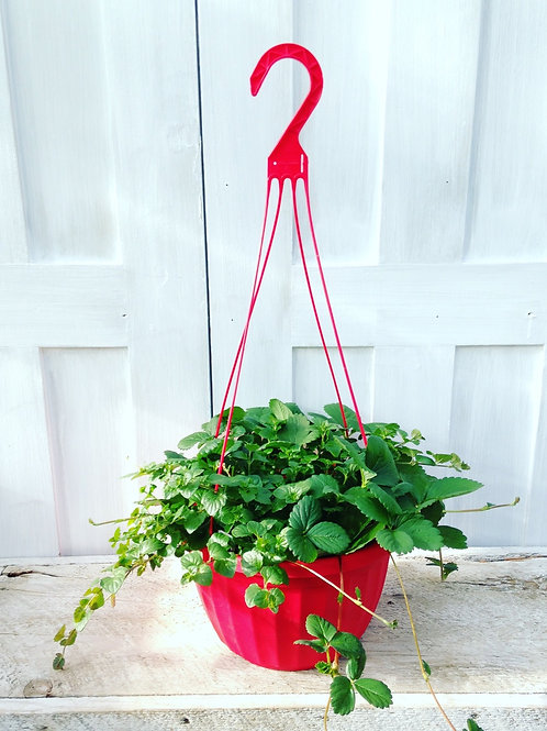 Strawberry & Mint Hanging Basket